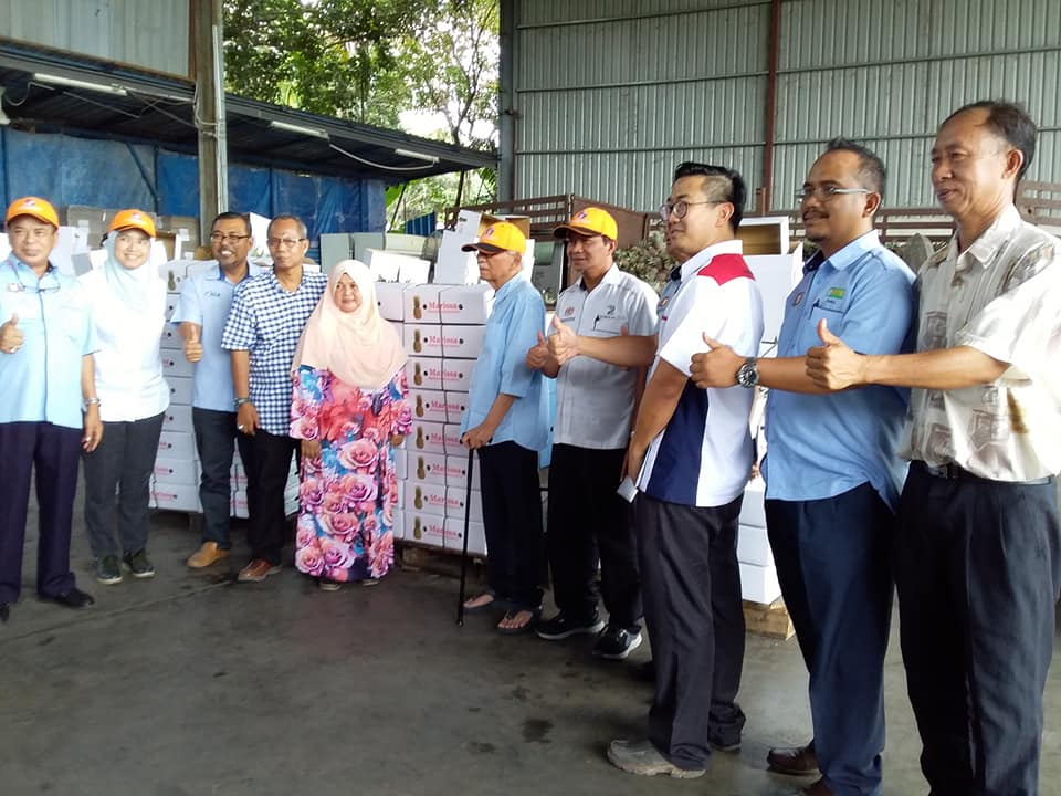 Malaysian Pineapple to be exported